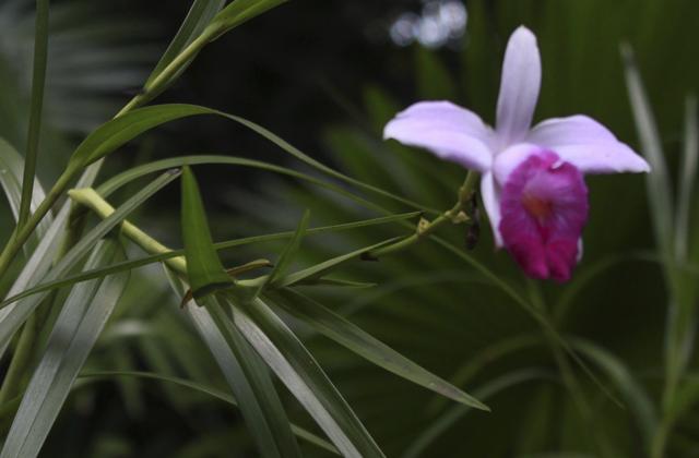 jardim-botanico-01