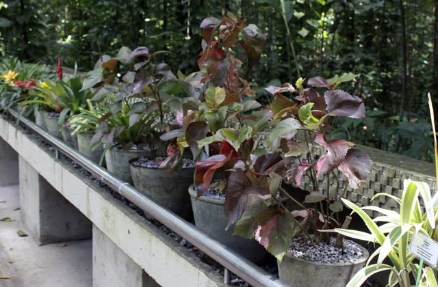 jardim-botanico-04