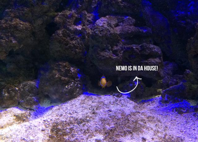 aquario-natal-blog-oxente-menina-03