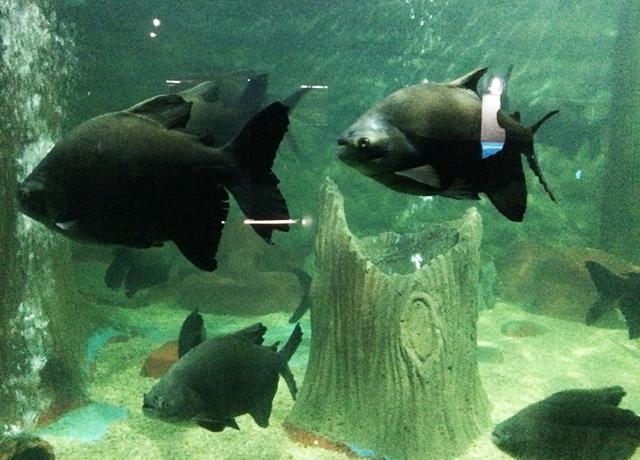 aquario natal peixes