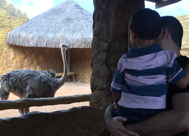 aquario natal avestruz