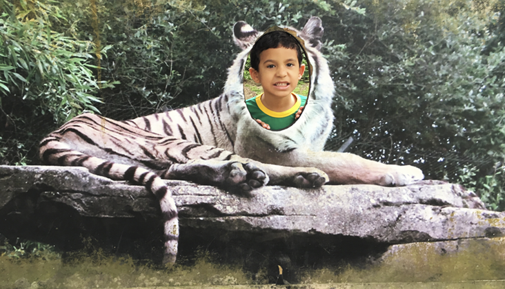 tigre zoo recife