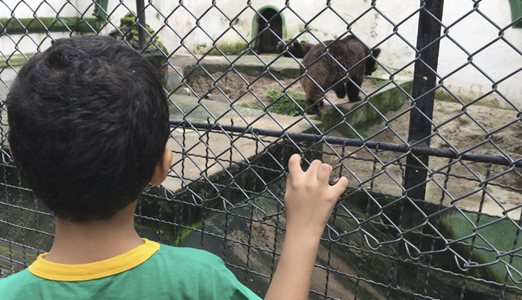 urso zoo recife