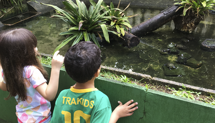 zoo recife tartarugas
